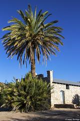 Palms and Historic Buildings (isaac.borrego) Tags: uploadedviaflickrqcom morning buildings mountains desert history hotsprings bigbend nationalpark texas canonrebelt4i