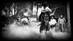 Índio da Lata (Eduardo Amorim) Tags: gaúcho gaúchos gaucho gauchos cavalos caballos horses chevaux cavalli pferde caballo horse cheval cavallo pferd crioulo criollo crioulos criollos cavalocrioulo cavaloscrioulos caballocriollo caballoscriollos pampa campanha fronteira dompedrito riograndedosul brésil brasil sudamérica südamerika suramérica américadosul southamerica amériquedusud americameridionale américadelsur americadelsud cavalo 馬 حصان 马 лошадь ঘোড়া 말 סוס ม้า häst hest hevonen άλογο brazil eduardoamorim jineteada gineteada