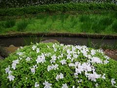 P1004252 (digitalbear) Tags: panasonic lumix gh5 sumida river kiyosumi garden eidai bridge tokyo japan sharehotel lyuro skytree fukagawameshi miyako yakatabune