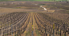 promeneur (travelben) Tags: vignoble marne france eu champagne landscape paysage vineyard nature vue route road shadow color couleur grille green patchwork colored country europe spring printemps vineyards vignes chemin randonnée champ rural agriculture campagne trek sentier