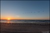 Sunrise (HasnMlk) Tags: flock usa beach texas birds nikon surise padreisland 1635mm d750 skycolor
