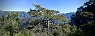 Bosc de Pentina 4