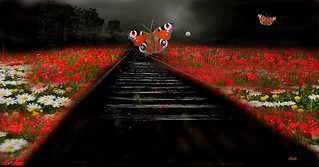 The butterflies on the rails