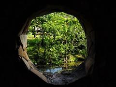 Nature Window (kopiecmarcin) Tags: nature window olympus omd10mark2 flickr estrellas