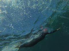 G0087910 (Visit Pilar de la Horadada) Tags: swimmers meeting point hibernismare swim natación nadar milpalmeras pilardelahoradada alicante costablanca vegabaja comunidadvalenciana quedada beach strand swimm