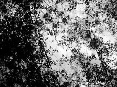 Mirror Distortions 2 (Rossdxvx) Tags: dark darkwater reflection blackandwhite abstract art surrealism surreal silhouette noir nature woods 2017