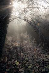 Muston Misty Meadow (Julian Barker) Tags: muston leicestershire england uk backlighting frost mist misty meadow grasses vegetation rime sun starburst julian barker canon dslr 600