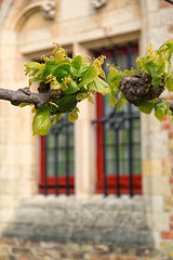 Brugge Windows (mclcbooks) Tags: vine vines brugge bruges belge belgium window windows red church