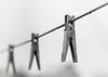 Clothespins (kirillklimenko) Tags: clothespins retro background rain old art area