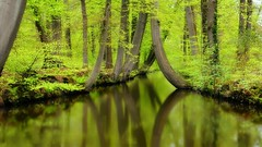 Twickelervaart (Aadilos) Tags: twickelervaart twickel borne delden twente nikon d5200 18105 green groen bos reflection water