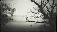 * (PattyK.) Tags: ioannina giannena giannina epirus ipiros balkans hellas ellada lake pamvotida lakepamvotida ioanninalake april 2017 whereilive branch tree snapseed blackandwhite δίπλαστηλίμνη λίμνηπαμβώτιδα λίμνηιωαννίνων κλαδιά ελλάδα ευρώπη ευρωπαικήένωση europe europeanunion amateurphotographer branches ιωάννινα γιάννενα ήπειροσ άνοιξη απρίλιοσ