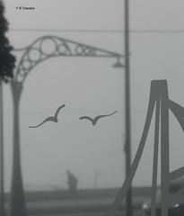 Niebla y opacidad. Fog and opacity. (Esetoscano) Tags: niebla fog vidrio glass opaco opaque impresiónabstracta abstractimpression bw bn byn paseomarítimo promenade acoruña galiza galicia españa spain