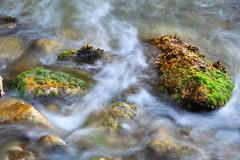 Seda entre las rocas. (Ál Men-chez) Tags: mascarat mar rocas algas seda
