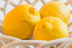 Sidelight. (Angela.Dee) Tags: cy365 lemons lemon yellow sidelight bright dof depthoffield canon 6d 100mml macro three