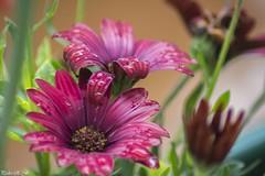 Baño primaveral (pedroramfra91) Tags: primavera spring naturaleza nature flores flowers