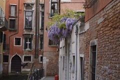 Shadows of red and wisteria (Insher) Tags: italy venice venezia wisteria brick window