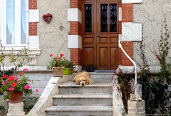 Sad dog in a pretty house (Chris Coeur) Tags: chien dog perro marches stairs escalera façade facade fachada porte door puerta triste sad
