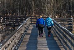 _DSC6137 (doug.metcalfe1) Tags: 2017 aurora dougmetcalfe hiker nature ontario outdoor spring yorkregion boardwalk