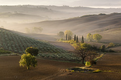 Val d'Orcia, Toscane (Olivier Rocq ᕈhotography) Tags: toscane toscana italia italie italy countryside landscape trees dorcia brumes mist light travel nikonflickraward thebestofday gününeniyisi