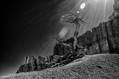 Bryce Canyon, Utah (leehobbi) Tags: bryce canyon national park outdoors landscape tree rock formation flare bw blackandwhite