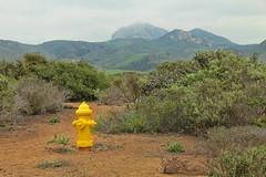 Doggy Hiking Trail (David K. Edwards) Tags: hydrant yellow fire trail slo sanluisobispo dog doggy yap woof arf bark noise endlessnoise landscape