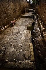 A dog's walk (Leaning Ladder) Tags: cuzco cusco peru street sanblas animals leaningladder canon 7d quechua dogs