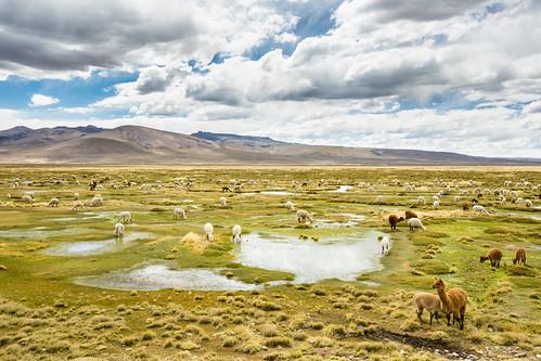 Peru_BasvanOortHR-107