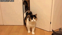A Tight Squeeze - GIF (Chikkenburger) Tags: animated gifs gif senor señor funny memes memebase cheezburger chikkenburger