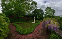 wisteria (kderricotte) Tags: dumbartonoaks washingtondc gardens wisteria flower plant landscape sony sonya7ii 1018mm panorama clouds sky georgetown garden urnterrace