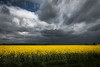 Colorful storm (luigig75) Tags: flowers field fiori landscape clouds storm weather temporale france essonne francia 70d 1022 canonefs1022mmf3545usm