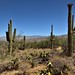 On the Garwood Trail in Saguaro National Park