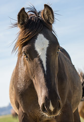 wild horses34-7799 (Jami Bollschweiler Photography) Tags: wild horses horse onaqui herd wildlife foals fighting stallions west desert utah photography funny great basin