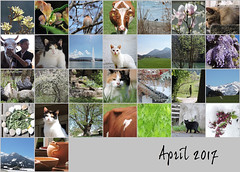 April 2017 mosaic (keepps) Tags: mosaic bighugelabs month