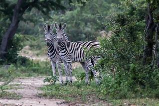 hiking Safari in Hoedspruit, Limpopo