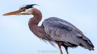 heron close