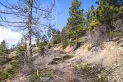 There's a road here (johnwporter) Tags: hiking scramble cascades northcascasdes mountains nationalforest wenatcheenationalforest wenatcheemountains roughhousemountain 徒步 爬行 喀斯喀特山脈 北喀斯喀特山脈 山 國家森林 韋納奇國家森林 韋納奇山脈 毆鬥山 atx116prodx tokinaaf1116mmf28 wideangle wideanglelens 廣角 廣角鏡