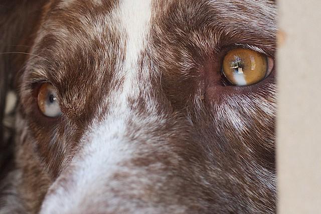 Aye Eyes