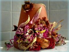 Riparo a fine estate (Aellevì) Tags: aellevì composizionefloreale petali fiorisecchi fioriestivi vento brezza vaso lumaca chiocciola guscio sonno nanna letargo caco