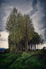 s e n t i e r o (swaily ◘ Claudio Parente) Tags: albero tree erba nikon nikond500 swaily claudioparente