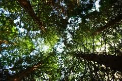 Trees (timdavis5263) Tags: westonbirt abstract arboretum