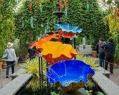 Macchia Forest (2017) within the Haupt Conservatory, Dale Chihuly Exhibit at the New York Botanical Garden (jag9889) Tags: 2017 20170511 allamericacity art artwork artist blownglass botanicalgarden bronx bronxpark chihuly chihulynybg2017 dalechihuly exhibition forest garden glass hauptconservatory indoor installation kunst landmark landscape ny nybg nyc nationalhistoriclandmark newyork newyorkbotanicalgarden newyorkcity people plants sculptor sculpture skulptur thebronx usa unitedstates unitedstatesofamerica visitor jag9889 rainforest