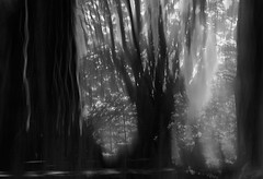Metamorphosis (gogos_yiannis) Tags: nature tree forest surreal bw icm multipleexposures