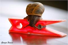 Una modella diversa (GiophotoArt) Tags: lumaca colori red snail
