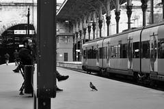 A pomba / The pigeon (Francisco (PortoPortugal)) Tags: 1152017 20161022fpbo4269 pb nb bw monochrome sbento estaçãodesbento porto portugal portografiaassociaçãofotográficadoporto franciscooliveira