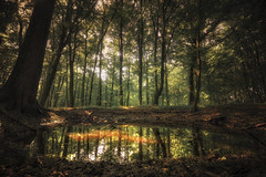 Tümpel (-SebsTian-) Tags: nature outside trees tree sun shadow ligth forest lake water sony a58 sigma 1020