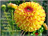 Sieg, der die Welt überwunden hat / the victory that conquers the world (Martin Volpert) Tags: bibel bibelvers bibelverskarte bible mavo43 blüte blumen flor cvijet kvet blomster flower floro õis lore kukka fleur bláth virág blóm fiore flos žiedas zieds bloem blome kwiat floare ciuri flouer cvet blomma çiçek pflanze blossoms überwinden welt sieg victory
