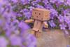In The Garden. (sdupimages) Tags: campanules dof bokeh garden jardin stilllife flower danbo