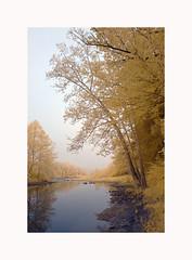 Morning on the Cheat (DRCPhoto) Tags: digitalinfrared irconverteddslr supercolor cheatriver westvirginia