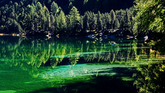 The elegance of light (ej - photography) Tags: light licht green water lake nature natur reflection spiegelungen grün olympus omd em5 mzuiko schweiz suisse svizzera switzerland forest wald bergsee alpes alpen sunlight sonnenlicht 2014 september palpuognasee lai graubünden