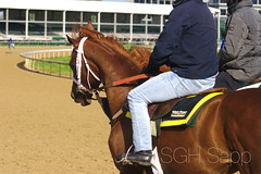 IMG_8316_01 (Sagrasa) Tags: churchilldowns kentucky horseracing thoroughbred